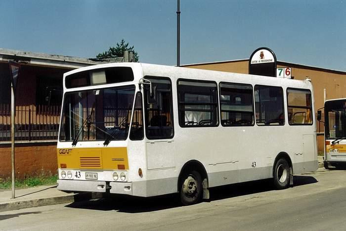FIAT 316 Menarini, GEAF - Frosinone