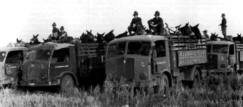 Fiat 666NM-RE Trasporto quadrupedi degli Alpini in Russia.