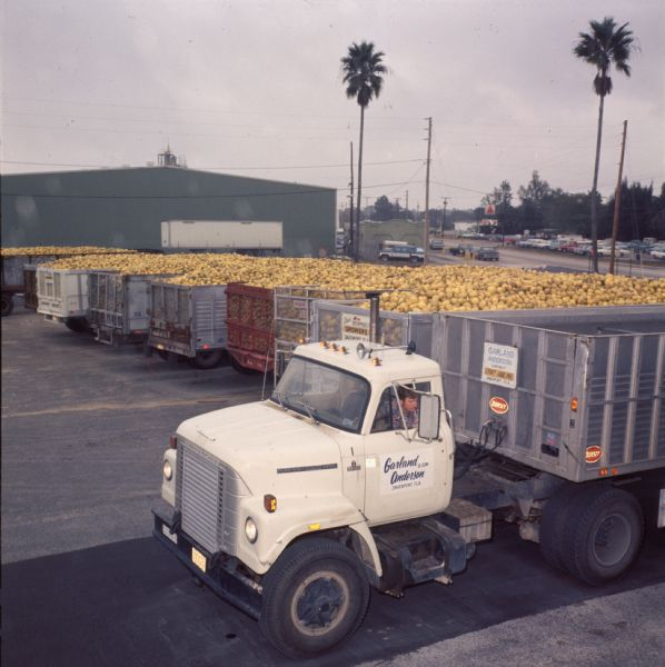 1977 IHC Truck and Several Trailers Full of Oranges